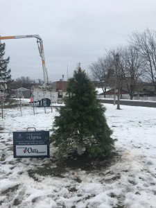 Celebration of Lights 2019 Tree